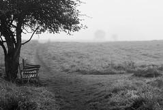 Foggy morning - bench with a view (Peter Bros Nissen) Tags: bench fog tree view bænk udsigt farum storebjerg træ tåge fuji fujifilm fujix100s x100s bw black white blackwhite blackandwhite sh sort hvid monochrome