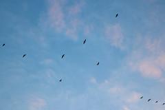 Birds Gewande (Photography by Martijn Aalbers) Tags: sunrise zonsopgang sun zon nature natuur gewande shertogenbosch denbosch noordbrabant brabant thenetherlands nederland canoneos77d ef1740mmf40lusm