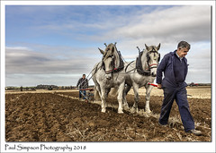 Cindy and Daisy, the ploughing horses (Paul Simpson Photography) Tags: paulsimpsonphotography horse horses animals farming farm plough ploughing northlincolnshire farmanimals field mud farmingcompetition ploughingafield england october 2018 imagesoffarms farmphotographs farmphotography oldfashioned oldendays howdidtheyploughfieldswithhorses