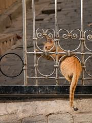 Ginger tabby kitten (Claire Ingram) Tags: morocco fes fez souq medina