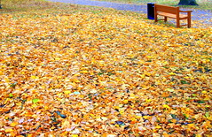 Autumn colors and empty bench and trash. (irio.jyske) Tags: townphtograph townphotograph townscapes townscape townpic town townphotos townphotographer townscapephotographer townscapephotograph park garden autumncolors autumnpic autumntime autumn autumnleaves landscapes landscape lanscape landscapephotos lakescape landscapephotographer landscapepics landscapepic landscapephotograph beauty beautiful photographer photograph photos photo pic nature naturephotograph naturephoto naturepictures naturepic naturescape naturephotos naturephotographer naturepics natural