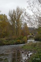 Rio Pisuerga (Guadasan2010) Tags: castilla palencia rio agua landscape