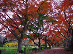 My favorite place (Kito K (fxkito2)) Tags: nature japan autumn tokyo color lumix olympus red omd