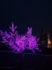 Blackpool Illuminations (Thomas_&_Sarah Cook) Tags: blackpool fylde lancashire illuminations trip 2018 september sony cybershot dsch400