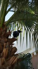 2018-09-19_11-00-35_ILCE-6500_DSC07866 (Miguel Discart Photos Vrac 3) Tags: 2018 202mm animal animalphotography animals animalsupclose animaux bird birds e18135mmf3556oss feathers focallength202mm focallengthin35mmformat202mm holiday hotel hotels ilce6500 iso125 kamelya kamelyacollection kamelyahotelselin nature naturephotography oiseau oiseaux pet sony sonyilce6500 sonyilce6500e18135mmf3556oss travel turkey turquie vacances voyage