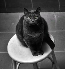 Quien no comprende una mirada, tampoco entenderá una larga explicación. (elena m.d.) Tags: cats claveblack monocromo 2018 new 7dwf