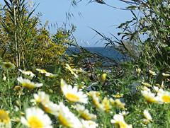 Flowery Sea! ('cosmicgirl1960' NEW CANON CAMERA) Tags: blue sky travel holidays puertobanus spain marbella andalusia costadelsol yabbadabbadoo espana