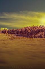 Fields (RawckinºPixel) Tags: ir irphotography infrared greece sky clouds kolarivision nikon d90 1855mm tree landscape