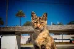 Cat... (hobbit68) Tags: cat fujifilm xt2 katze espanol sonne espana espagne sky sonnenschein spanien andalucia andalusien animals animal tier pets holiday summer urlaub