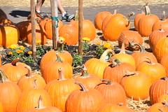 DSC_2562 (earthdog) Tags: 2018 needstags needstitle nikon d5600 nikond5600 18300mmf3563 fall autumn pumpkinpatch spinafarms farm food pumpkin edible