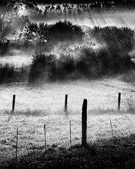 (Feans) Tags: sony a7r a7rii ii fe 24105 lampai teo galiza galicia mencer sunrise neboa fog mist