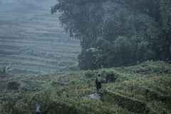 _DSC1267 (BisonAlex) Tags: 越南 vietnam sapa 沙壩 健行 trekking mountain rain could kid peoplelife dog market wood