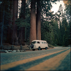 SL66.400NC.201810.18 (zampras) Tags: kokak portra 400nc rolleiflex sl66 504 distagon planar or sequoia national park
