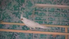 2018-09-19_11-04-37_ILCE-6500_DSC07879 (Miguel Discart Photos Vrac 3) Tags: 2018 202mm animal animalphotography animals animalsupclose animaux bird birds e18135mmf3556oss feathers focallength202mm focallengthin35mmformat202mm highiso holiday hotel hotels ilce6500 iso3200 kamelya kamelyacollection kamelyahotelselin nature naturephotography oiseau oiseaux pet sony sonyilce6500 sonyilce6500e18135mmf3556oss travel turkey turquie vacances voyage
