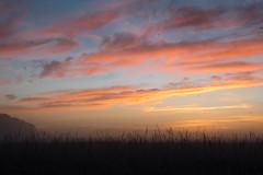 _DSC9495.jpg (thomasresch) Tags: sonneaufgang sun nordhaide panzerwiese nebel hartelholz sunrise sonne