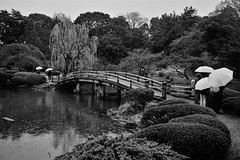 Shinjuku Gyoen National Garden (Nelo Hotsuma) Tags: shinjuku gyoen national garden tokyo cherry blossom festival sakura matsuri japan 上野公園 kōen 東京 日本