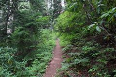 Tidbits Mountain-033 (rozoneill) Tags: tid bits mountain mckenzie river blue lake willamette national forest hiking oregon