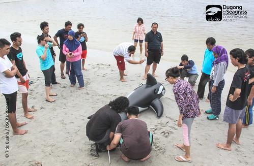 Dugong Stranding Handling Class