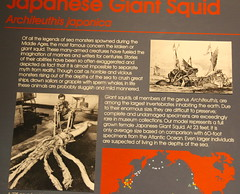 Japanese Giant Squid Information Board at the Museum of Natural History, Santa Barbara California (Trail Trekker) Tags: santabarbaramuseumofnaturalhistory japanesegiantsquid giantsquid santabarbaracalifornia