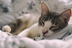 Alecrim (4rq!) Tags: cat animal cozy gato simple