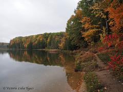 PA130284 (Child Moon) Tags: hashtag 2018topwrs awenda provincial park ontario hiking autumn fungus mushrooms leaves trails trees georgianbay waterfront