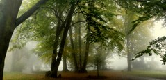 Park (wernerfunk) Tags: nebel fog park bäume trees forest wald
