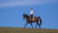 Basim_OS180041 (OliverSeitz) Tags: elbasim wachlarz elda arabian vollblutaraber pferd tier