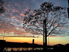 #Bonn #river #Rhein #Sunset (RenateEurope) Tags: bonn river rhein sunset badgodesberg autumn urban life trees cityscape europe nrw rheinland