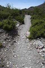2015 - Texas (Mark Bayes Photography) Tags: bigbendnationalpark texas usa unitedstates chihuahuandesert brewstercounty nationalparkservice americannationalpark westtexas borderingmexico park track trail