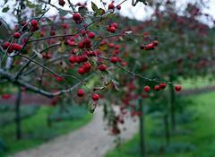 Yuni garden in autumn (threepinner) Tags: mamiya m645 sekor 80mm f28 negative iso160 selfdeveloped yunigarden yuni hokkaidou hokkaido northernjapan japan 由仁町 ゆにガーデン 北海道 北日本 autumn tree