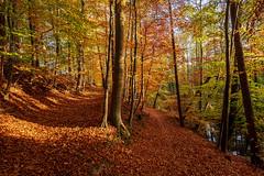 Herbstwald (lichtschacht-kiel) Tags: herbst fuji farben