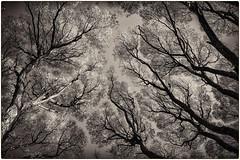 2018-10-16-SPb, Russia -DSC_9506-Edit (Mandir Prem) Tags: nature outdoor places russia stpetersburg city landscape leaves park reflection saintpetersburg tourism travel tree trees trip yellow осень