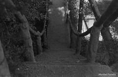 (maribelfiorella) Tags: analogue analogphoto analogshoot photography photograper analogphotography streetphoto 35mm 35mmphoto 35mmphotography