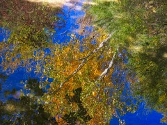 Fall Reflections (Robert Cowlishaw (Mertonian)) Tags: robertcowlishaw canonpowershotsx60hs sx60hs powershot canon mertonian fallstroll beauty beautiful wonder awe ineffable stream reflections color colours nature fall2018 autumn deeply ripples hope