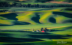 Palouse Farm Land_06 (John Bielick) Tags: 2018 america colfax copyrighted johnbielick northamerica palouse park photogtrekker statepark steptoebuttestatepark thestates theunitedstates us usa unitedstates unitedstatesofamerica washington whitmancounty farmland field rolling hill green farming scenic