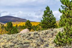 Sagebrush, pines, & aspens (palbion) Tags: blossomsfoliage twinlakes colorado unitedstates us
