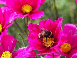 Bee's last feed of summer