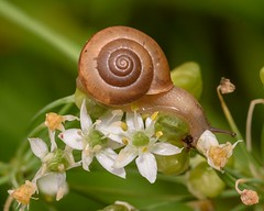 Snail's pace (d-day buff) Tags: backyard closeup flowers garden green insects macro sigma150mmtexas