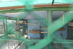 2018-09-19_11-04-26CanonEOS1_IMG_2543_Kiri (Miguel Discart Photos Vrac 3) Tags: 2018 animal animalphotography animals animalsupclose animaux bird birds canon canoncanoneos1100d canoncanoneos1100defs1855mmf3556iii canoneos1100d efs1855mmf3556iii feathers holiday hotel hotels iso100 kamelya kamelyacollection kamelyahotelselin nature naturephotography oiseau oiseaux pet travel turkey turquie vacances voyage