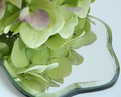 on the mirror (ryorii) Tags: closeup macro enelespejo hydrangeamacrophylla canon macrofriday viola purple verde green reflection flowers riflesso fiori fiore ortensia hydrangea allospecchio specchio onthemirror