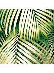 Nature...  #pratikbarotphotography #mobilephotography #naturelover #nature #greenplants #treephotography #plant #garden #gardening #ecofriendly #natureair #naturephotography #travel #travelphotography (ipratikbarot) Tags: pratikbarotphotography mobilephotography naturephotography gardening plant travelphotography garden treephotography naturelover greenplants nature natureair ecofriendly travel