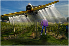 All that therapy to get over my phobia of being-photographed, and then this! (Fotofricassee) Tags: plane crop duster man field crops grapes dust