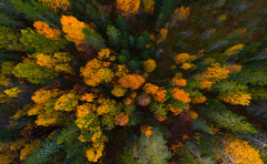 Autumn colors (Tore Thiis Fjeld) Tags: norway autumn forest trees drone mavic autumcolours verticalperspective vertical forestfloor autumnal