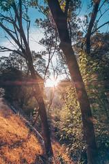 West Coast Road Trip (Thru My Eyes: Photography by Nicholas James) Tags: roadtrip westcoast california cali camping hiking adventures oregon love nature landscapes fujifilm fujilove ocean pch route1 thelongway