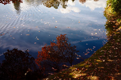 (Splat Photo) Tags: autumn reflection leaves sheffield park gardens sussex sony rx1r zeiss sonnar 35mm f2