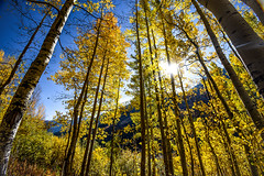 Aspen trees (nbalsaleh) Tags: aspen colorado fall autumn colors trial hike trees landscape d7200 wideangle photography lake september maroon bells mountains 50mm 1020mm nikon clouds leaves