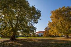Burgsteinfurt_Schloss_Park-1251 (encyclopaedia) Tags: burgsteinfurt schloss brd germany westfalen westphalia castle lightroom raw herbst autumn