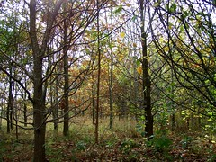 Sharing Our Special Place (ERIK THE CAT Struggling to keep up) Tags: trees woods toft littleheath staffordshire
