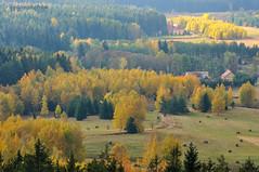 Yellow autumn (II) (Grzesiek.) Tags: fall yellow jesień autumn