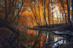 Am Mühlenbach (michel1276) Tags: haltern sythen germany nrw bach wald forest autumn herbst creek mühlenbach water wasser